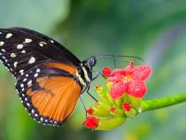 Picture of a butterfly in the botanical gardens