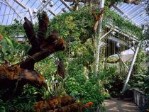 Interior view of the atrium inside of the botanical gardens