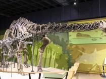a dinosaur in the museum