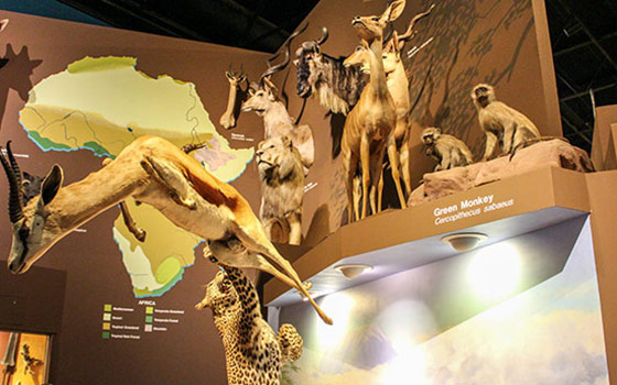 Admission To Cleveland Museum Of Natural History