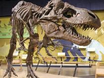 T-rex at the museum