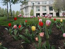 Exterior of the library with tulips in front