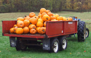 image of pumpkins in a wagon