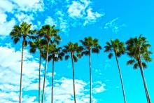 A row of palm trees with a blue sky with clouds in the background