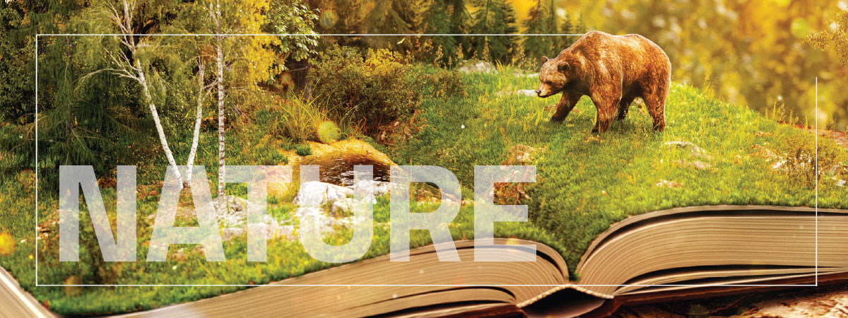 Nature written over a picture of a bear in a forest coming out of a book.