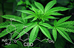 Marijuana leaf with chemical compound formula