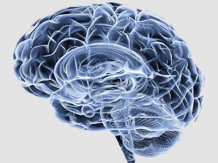 Gray brain transparent neurobiological research Case Western Reserve University