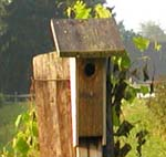 wooden birdfeeder on wooden post in green outdoor environment
