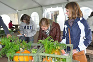 Students in a tented area working with crates of pumkins and root plants