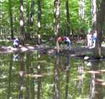 Lagoon in wooded environment with reasearcher sampling the water