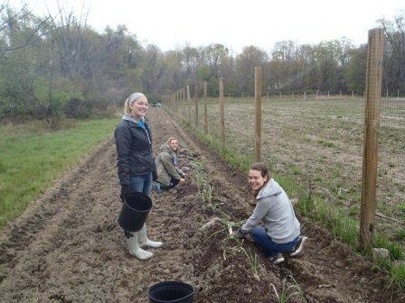 Three students planting in the CWRU Wade Vegetable Garden