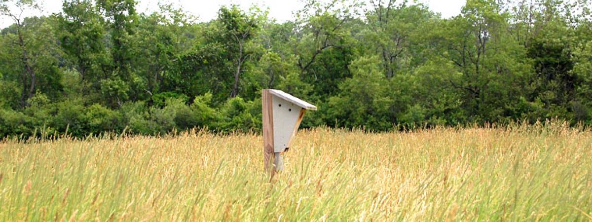 Mid range image of wooden birdfeeder in a field of tall grass, with green trees in background