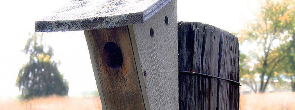 Close up picture of wooden bird feeder in a field