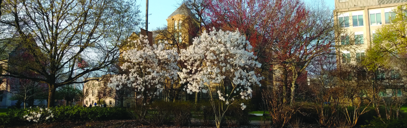 Trees in bloom on Main Case Quad in front of Adelbert Hall