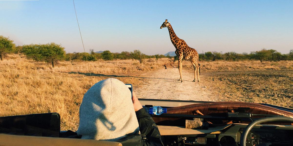 Student in passenger seat of car taking photo of a giraffe