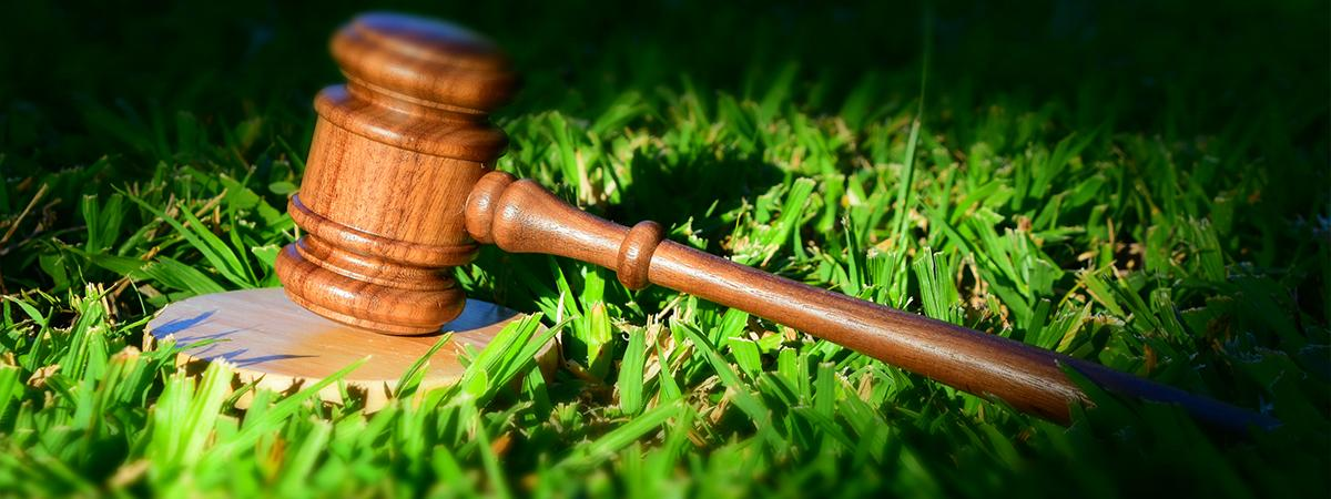 photo of gavel in grass