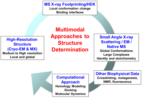 Multimodal approaches to structure determination, highlighting the use of multiple techniques such as Cryo-EM, crystallography, small angle X-ray scattering, and X-ray footprinting together with computational approaches and other biophysical data to solve structural biology problems.