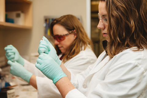 Two women in white lab coats and green sterile gloves work next to each other at a lab bench