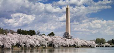 Image of Washington Monument as seen from the Potomac river with white and pink blossoming trees in the midview