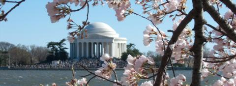 Image of Thomas Jefferson Memorial with a large crowd surrounding it and seen from across the Potomac with the branches of a cherry blossom tree in the foreground