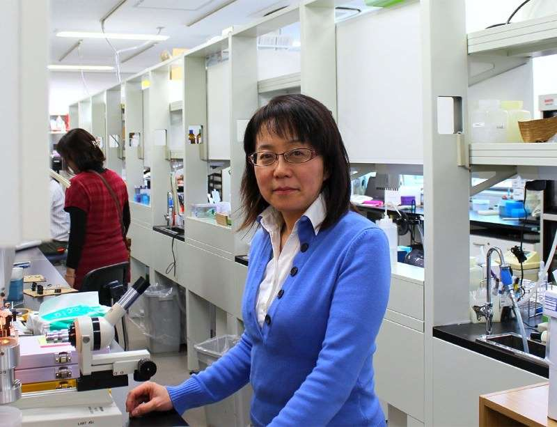 Image of Dr. Masayo Takahashi in her lab
