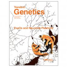 Cover of Trends in Genetics magazine, volume 34 number 1, January 2018, ISSN 0168-9525 by cellpress reviews, with two young orange black and white foxes playing on botton right, with label FoxOs and Neuronal Plasticity in center, with black radiating branches with black areas on white background as background.  all text in orange.