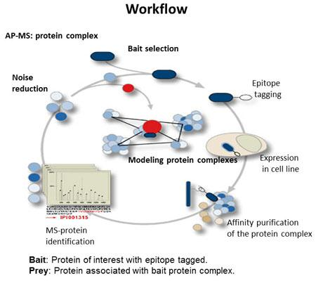 Interaction Proteomics AP-Mass Spectrometry