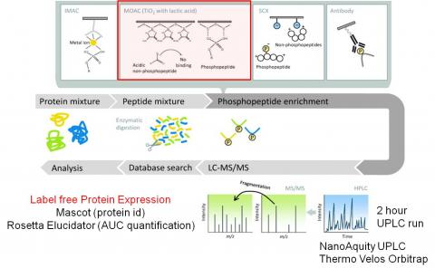 global phospho expression proteomics