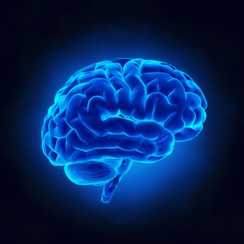 Image of a brain in blue