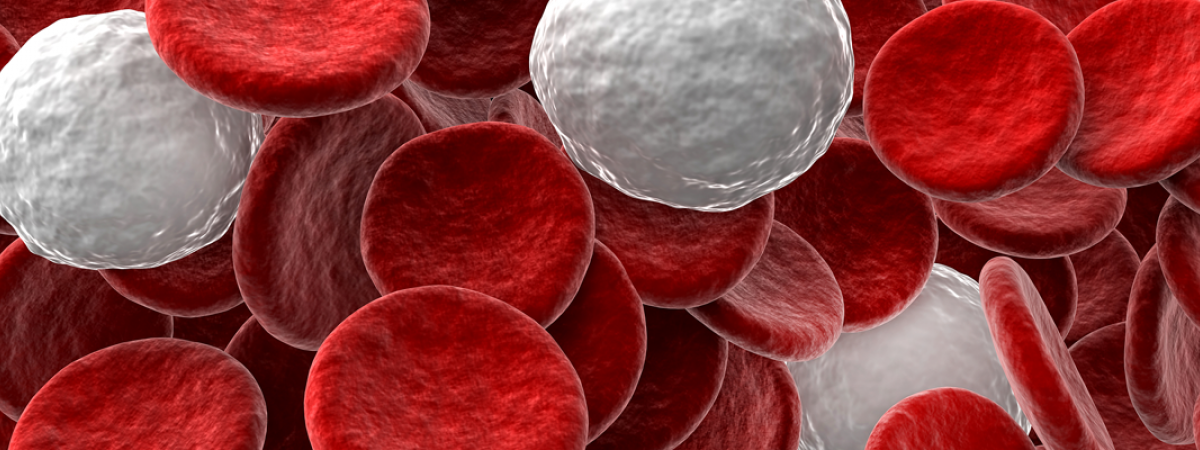 3D close-up rendering of red and white blood cells