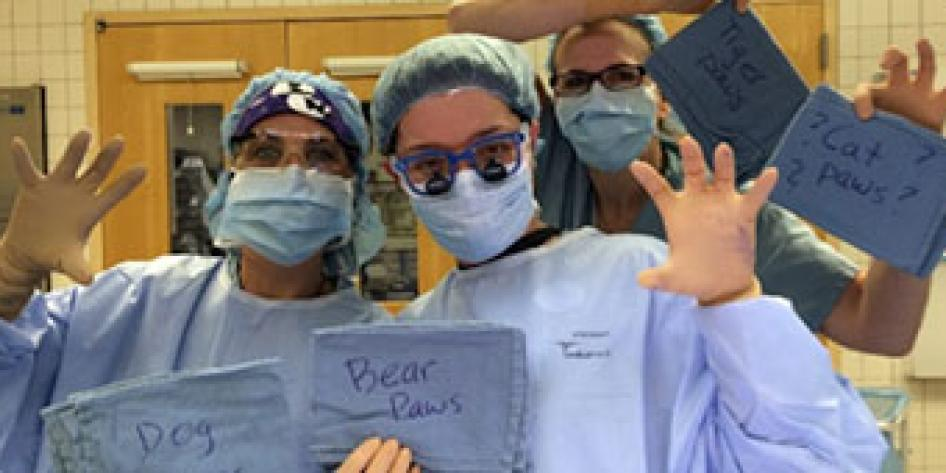 Cherie Kozlina (OR tech), Dr. Karem Harth, Beth McCluskey, RN in OR scubs in OR theater holing up blue signs in one hand that say Dog, Bear Paws and Cat Paws, and imitating paws with their other hand