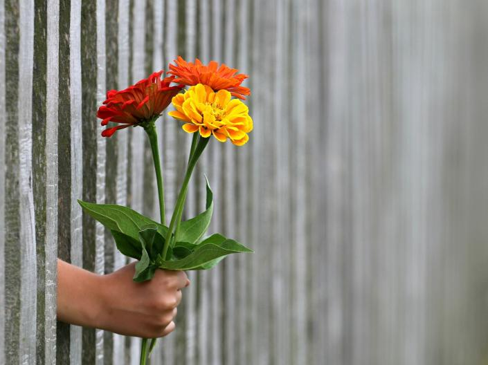 a hand holding 3 flowers through a fence