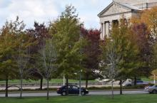 outdoor view of trees in front of severance hall