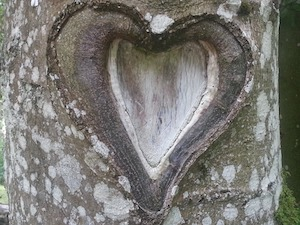 image of a heart shape in a tree