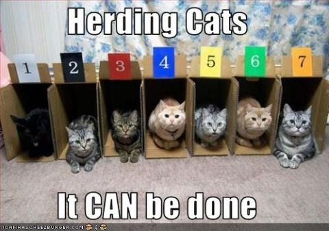 Cats in numbered boxes